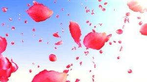Elizabeth Blue flying rose petals
