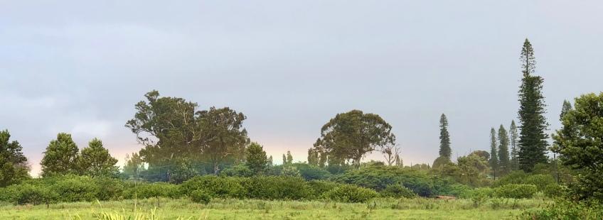 rainbow, Maui, Hawaii, Hui Noeau,